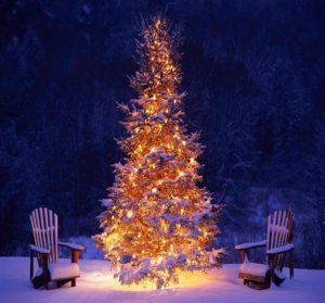 установить елку в квартире или во дворе своего дома 2